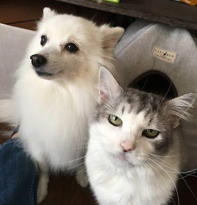 ぜんざい(犬)・あんみつ(猫)